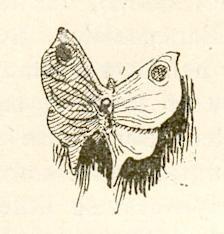 Мотылек
